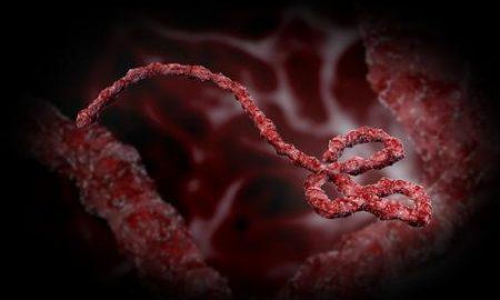 ebola_zombie_virus