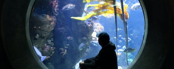 Accelerate Love If You Go Before Dating an Aquarium