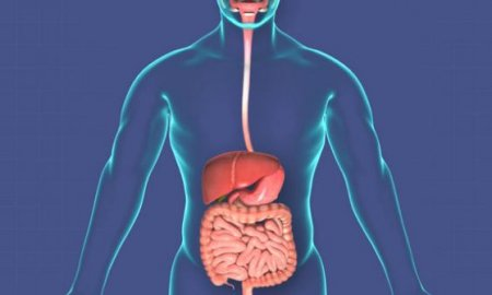 Interesting facts about the digestive system